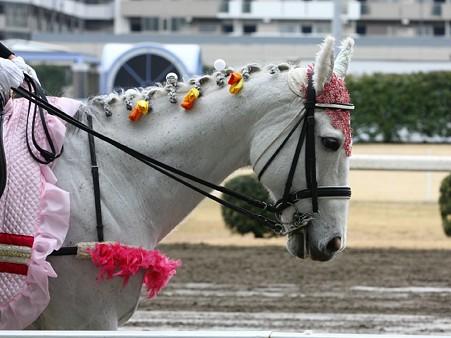 川崎競馬の誘導馬03月開催 チューリップVer-120301-18