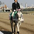 写真: 川崎競馬の誘導馬04月開催 桜Verその1-120409-08-large