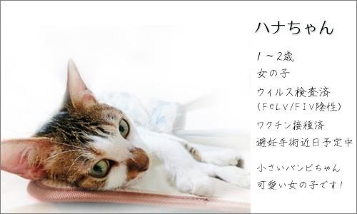 110903-新しい家族募集ちぅ!~ハナちゃん~