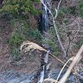 Photos: 時雨不動滝 2011.12.29-2