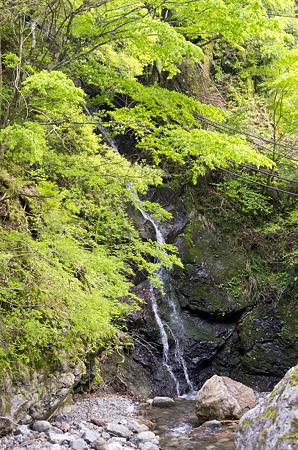 布滝トンネル先の不明滝 2012.5.7