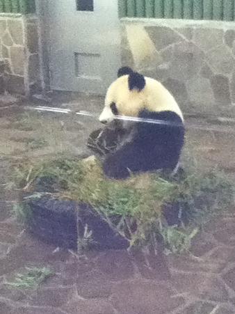 20110827王子動物園(4)