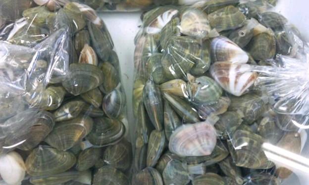 写真: 吹上浜のナンゲ(石貝)の貝汁が旨いんだ。