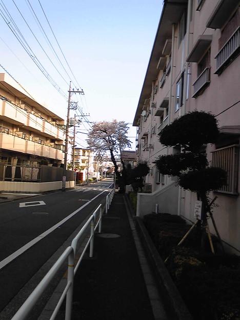 写真: 散歩コースの途中には、狭い...