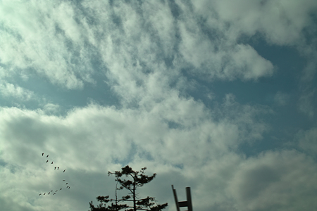 Birds_in_the_sky03102012dp2