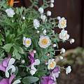 Photos: flower03242012dp2-04