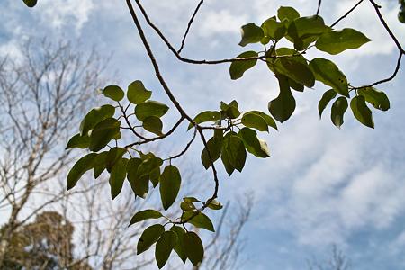 leaves04062012dp2