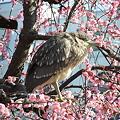 Photos: 鳥さん