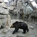 写真: クマ舎完成DSCN1405
