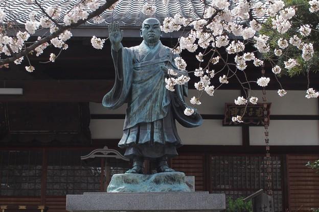Photos: P4071111 桜間の日蓮