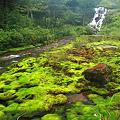 チャツボミゴケのある渓谷