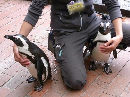 20120331 掛川 ペンギンランチ02