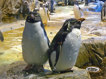 20110815 海響館 亜南極水槽08