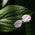 写真: 花びら 5