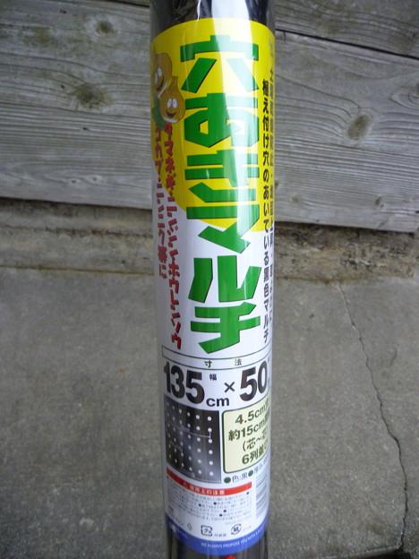 2011/11/13 穴あきマルチ