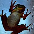 Photos: カエルのご訪問