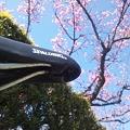 桜とチャリンコ1