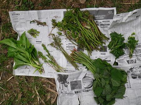 2012/05/02の収穫1