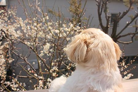 梅とくるみ1