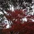 Photos: 11月12日「紅葉」