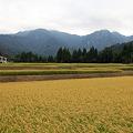 高原の田んぼ