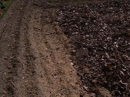 畑に投入したもみ殻と落ち葉