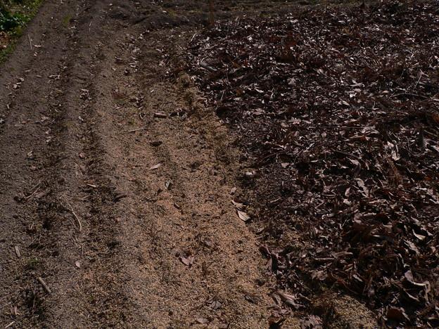 Photos: 畑に投入したもみ殻と落ち葉