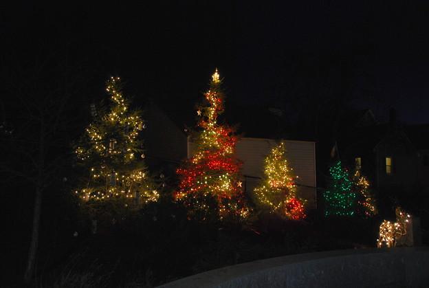 写真: Trees 12-10-11