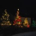 Photos: Trees 12-10-11