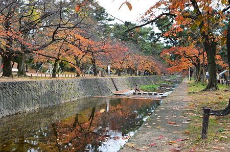 夙川公園(紅葉)