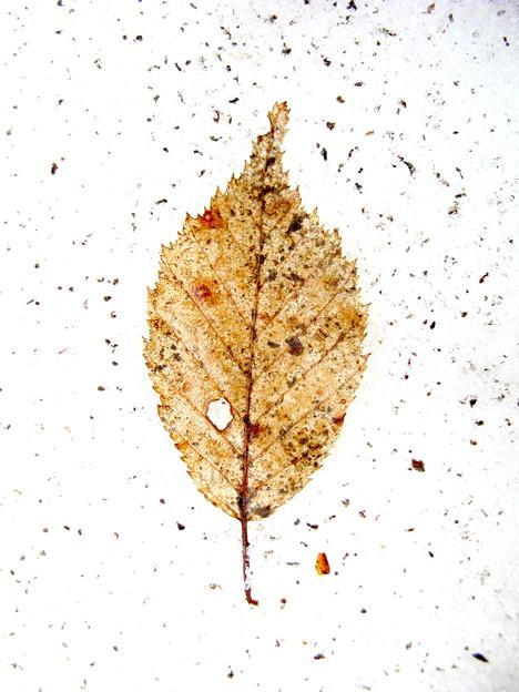 雪のキャンバス ♯1brown leaf