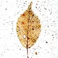 Photos: 雪のキャンバス ♯1brown leaf