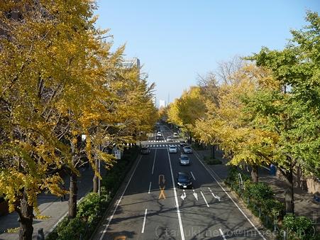 111130-横浜 紅葉  山下公園通り (35)