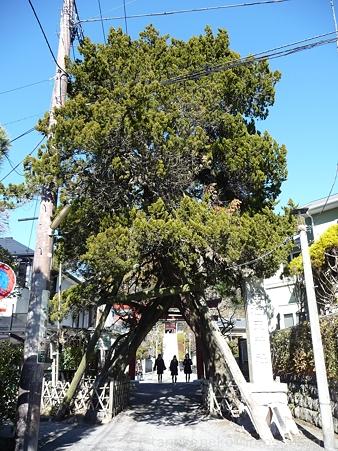 120208-荏柄天神社 (7)