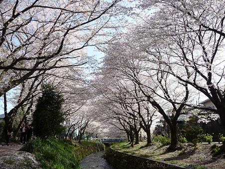 120412-千本桜 (43)