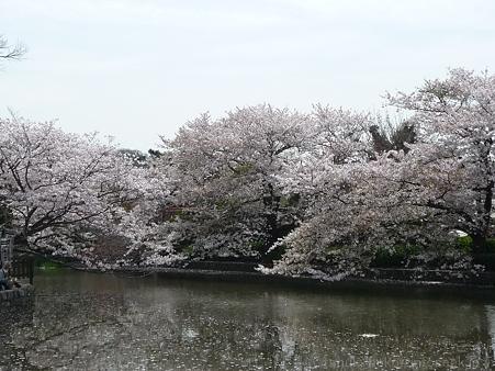 120413-八幡さま (40)