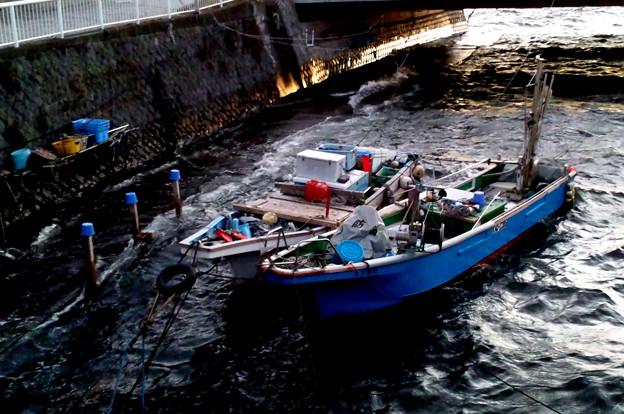 境川河口20111225