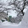 雪に埋もれる桜並木03-12.01.14
