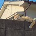 Photos: ぬこ