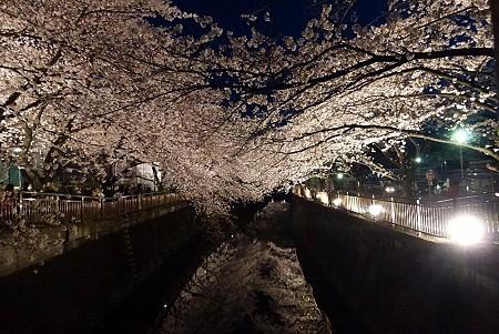 桜のライトアップ(東宝付近の仙川)
