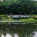 二の丸庭園のハナショウブ水鏡2