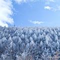 Photos: 雪 EOS7D  SP AF 28-75mm F/2.8 XR Di LD Aspherical [IF] MACRO (Model A09)