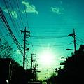 Photos: 太陽に向かって