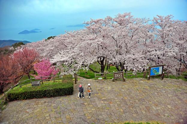 Photos: 紫雲出山の美しい桜 ♪