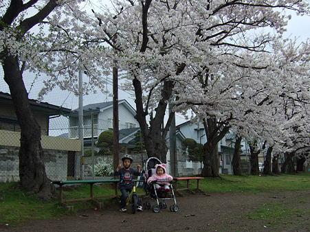桜綺麗だね。