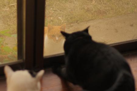 家猫大騒ぎ