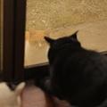 写真: 家猫大騒ぎ