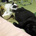 写真: 姉猫キック