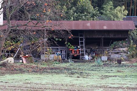 2011.10.25 和泉川 柿