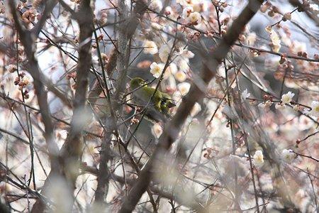 2012.03.25 追分市民の森 メジロ デート